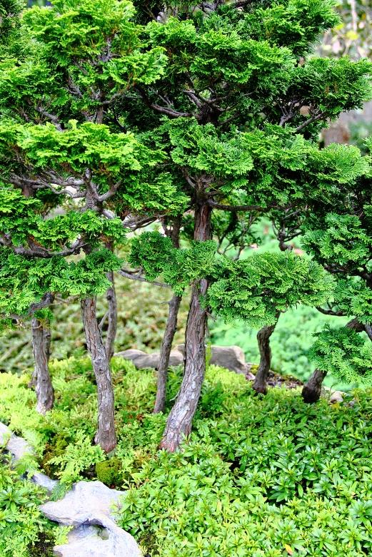 NC-Arboretum22