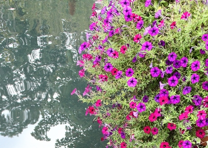 NC-Arboretum26