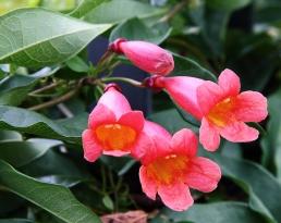 NC-Arboretum38